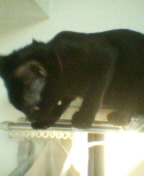 031020_katen01.jpg
