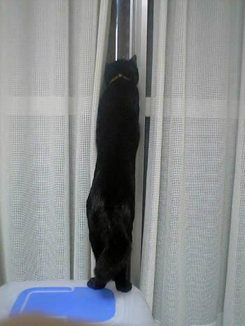 他の猫の気配に警戒中