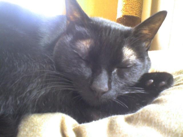 朝から寝る猫