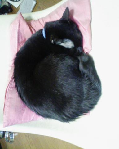 昨日の猫と今日の猫
