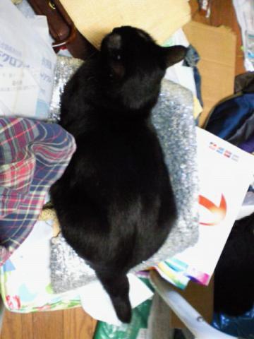 白猫→黒猫?