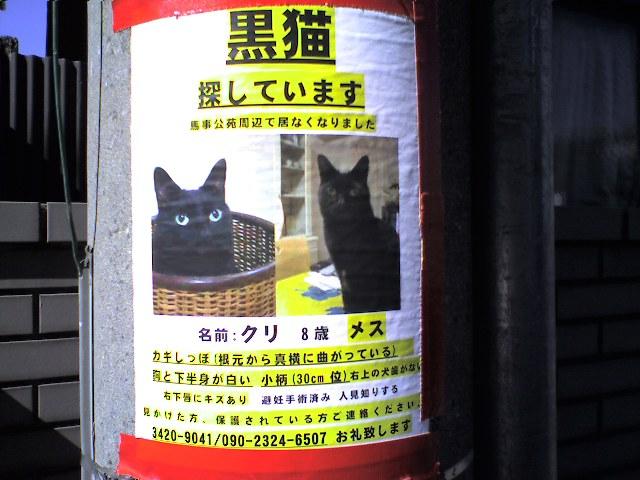 猫、探しています